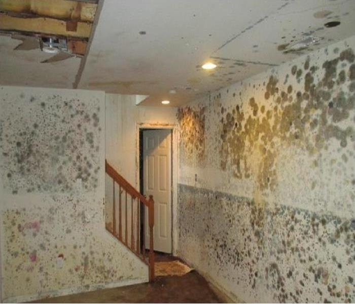Moldy Walls in home